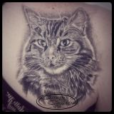 Crazy Colors-Tattoo Schulterblatt- Katzenportrait black and grey